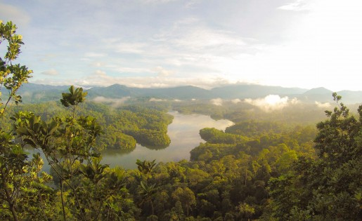 Cool Earth: working to support rainforests